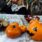 Halloween by Kjellvertz