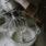 Recept på glutenfria frasiga croissanter