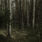 Stark integritet, en skogsutflykt och drömmen om friluftsliv