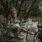 Madeleinekakor med lavendel under fläderträdet