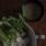 Somen spring bowl with sesame