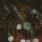 Trädgårdsfocaccia med vårprimörer