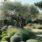 Mediterranean garden…