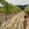 Toscana i september